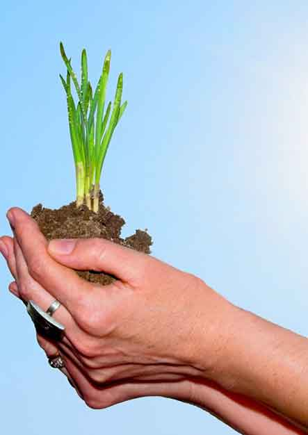 hands-holding-a-plant_1160-929